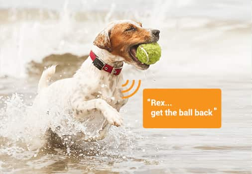 Our unique solution that lets you deliver audible commands to your pet using your own voice - even when they are out of sight