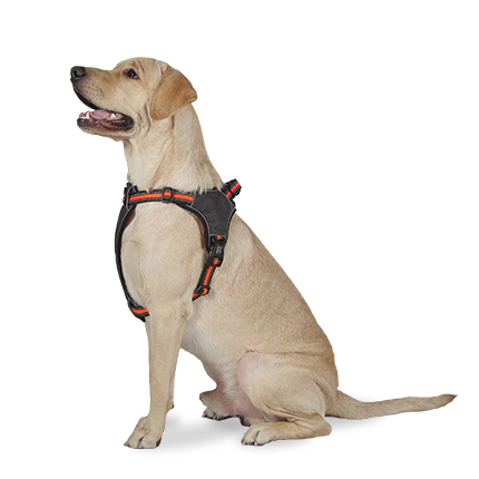Pawfit Harness For Dogs